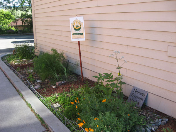 Herb Garden in Missoula, Montana and Highbridge Medicinal Trail in NYC