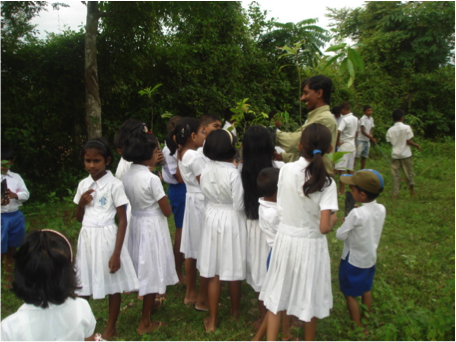 Native Forest Foundation: Conserving & Popularizing Wild Fruits in Sri Lanka