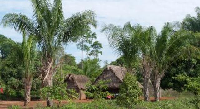 Jardin Etnobotanico Pueblo Chacobo-Pacahuara