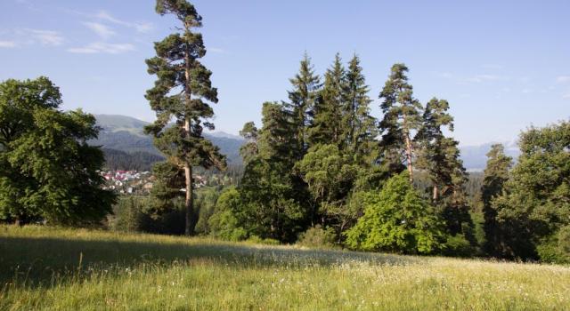 Bakuriani Alpine Botanical Garden