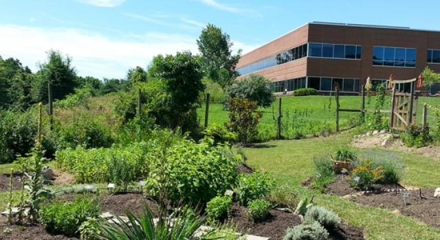 MUIH-herb-garden