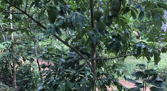 Forest Garden Organics