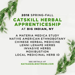 Catskill Herbal Apprenticeship