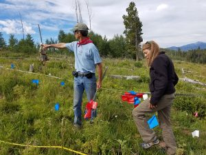 Daniel Gagnon, left, owner of Herbs Etc. in Santa Fe, and Maggie Riggs, a volunteer from Lawrence, Kansas, prepare to plant flags to mark the levels of osha regeneration in study plots on Missionary Ridge.