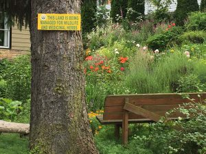 Sacred Plant Sanctuary at Seattle School of Body-Psychotherapy