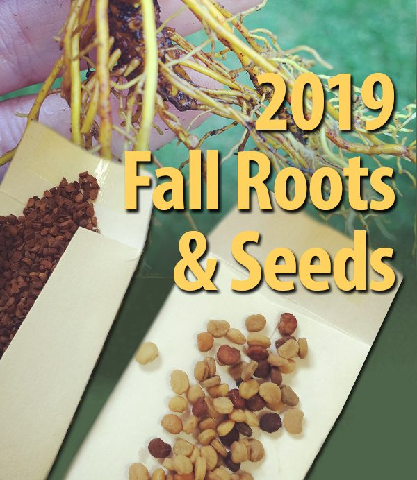 2019 Fall Roots & Seeds