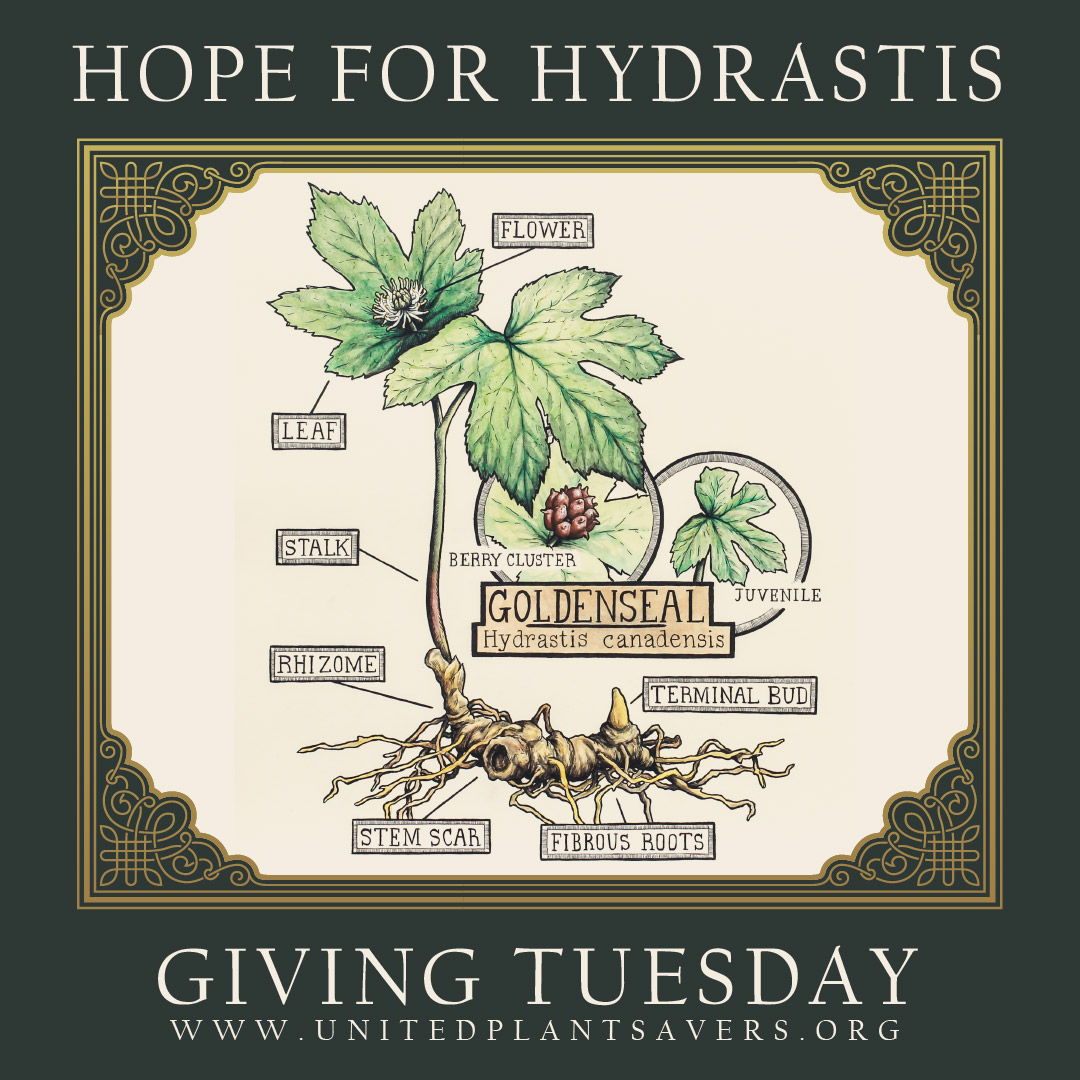 Hope-for-Hydrastis-Giving-Tuesday-post