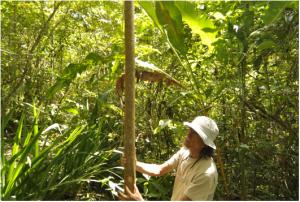 Rafael Ocampo In the medicinal herb gardens at Finca Luna Nueva