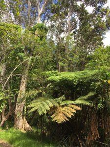 MaunaLoaendemicforest