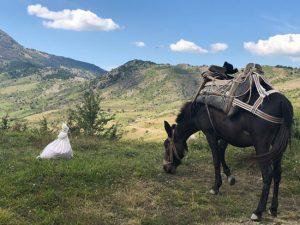 albania-mule