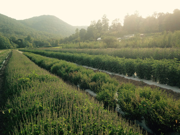 biodynamic-med-herbfarm