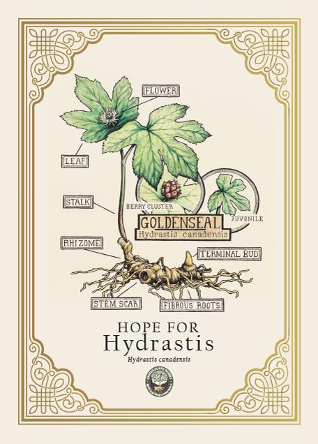 Hope for Hydrastis Program