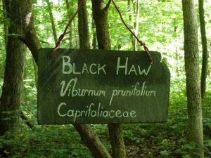 black haw sign