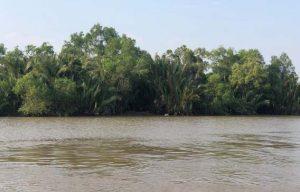 delta ecosystem