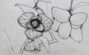 North American Pawpaw Flower & Fruit by Katherine Ziff