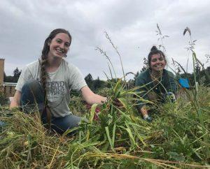 removing invasive grasses bastyr