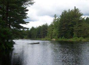 white pine pond