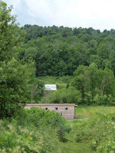wildfower hill