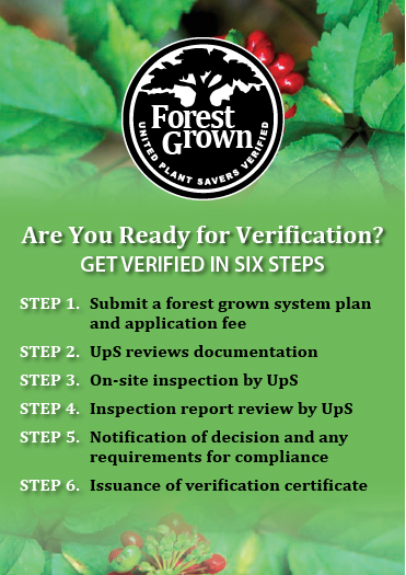Six Steps for Forest Grown Verification