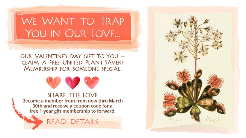 Valentine's Day Gift Membership